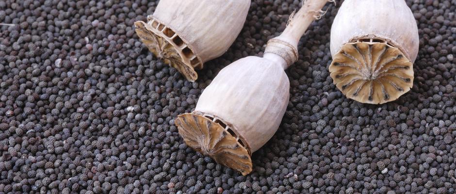 mohn-poppyseed-940-400